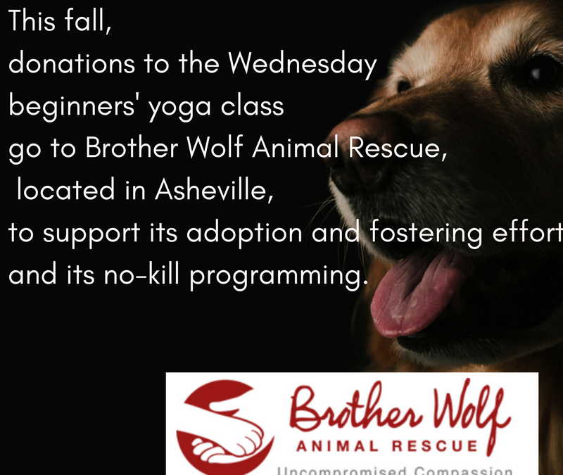 Brother Wolf is our charity of the quarter.